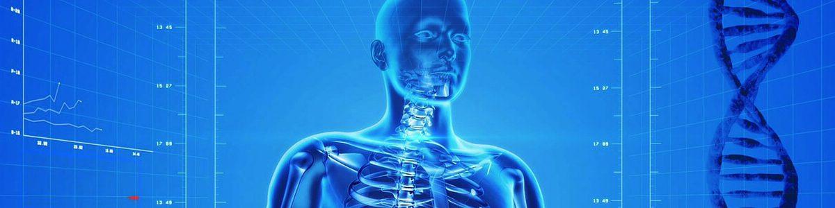human-skeleton-163715_1280-001